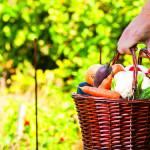 sin intermediarios venta agro