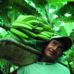 bananas-equal-exchange-male-322x212