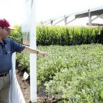 la-biotecnologia-reduce-un-20-el-impacto-ambiental-de-la-agricultura-296312_595_378_1-322x212